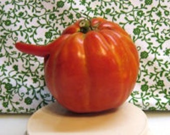 Catapano Giant Heirloom Tomato Seeds