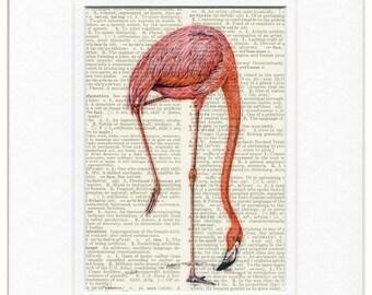 pink flamingo III print