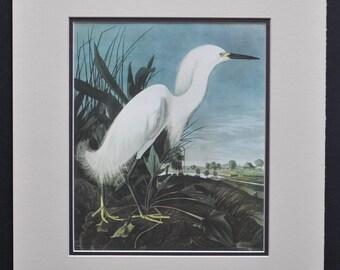 Snowy Egret by James John Audubon