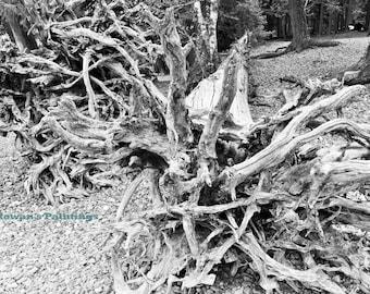 Nature Tree Print, Tree Photography, Tree Wall Art, Nature Print, Tree Print, Nature Photography, Nature Photo Print, Tree Art, Nature Photo