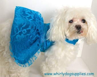 Turquoise Dog Dress, Small, Beautiful Lace over Satin, couture dress for dogs, Designer Fashion dog clothes