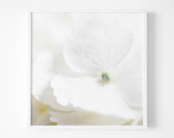 Dreamy White Hydrangea Print , Winter White Decor, Botanical Print, Modern Hydrangea Photography, White Flower, Square Print