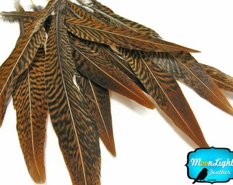"Natural Tail Feathers, 10 Pieces - 6-8"" Golden Pheasant Tail Feathers : 455"