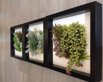 Succulent wall arrangement