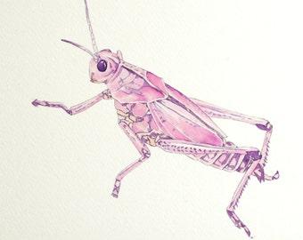 """Pretty in Pink Grasshopper 8"""" x 10"""" Original Watercolor Illustration"""