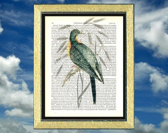 Extinct Passenger Pigeon on wild grass. Art print on vintage encyclopedia page  *212 year old paper*