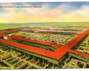 Stock Yards Cattle Kansas City Missouri postcard