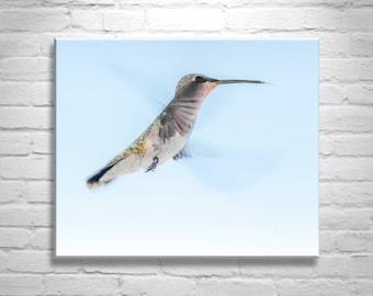 Bird Art, Hummingbird Art, Hummingbird Picture, Gift for Birder, Hummingbird Photograph, Bird in Flight, Bird Lover Gift, Bird Wall Decor