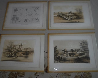 Perry 1853 Expedition Chinese Agriculture plates