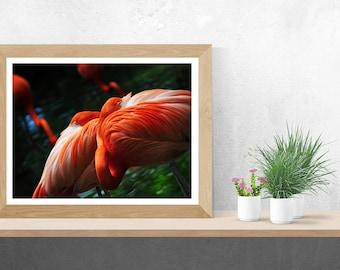 Flamingo (Lagoon Life) Fine Art Photograph Print