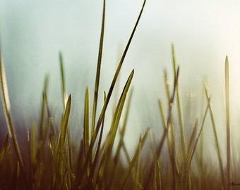 grass, sunset, dreamy, teal, green, fine art photography