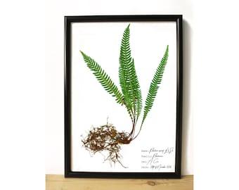 Fern botanical poster - Botanical art - Home decor print - Plant print - Nature lover gift