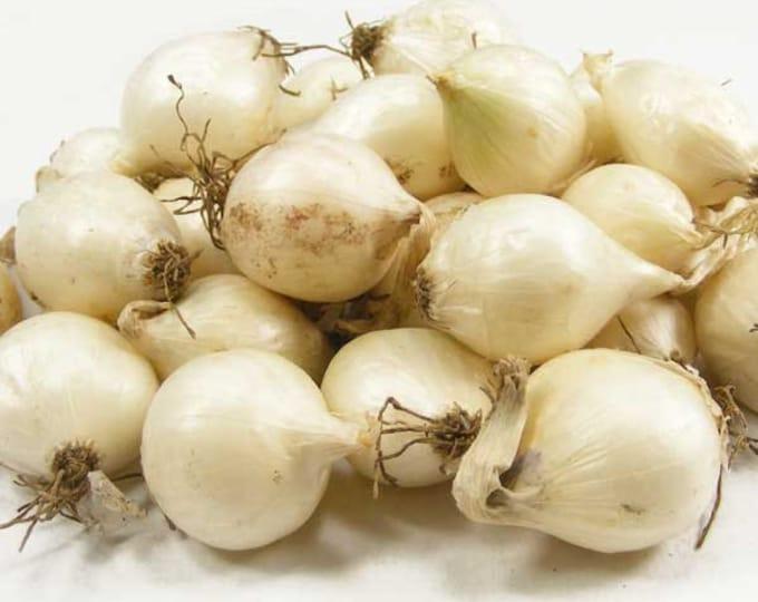 White Onion Sets Organic | White Ebenezer Onion Bulbs 8 oz. Non-GMO Spring Shipping