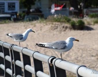 Photography, Beach, Seagulls on Pier