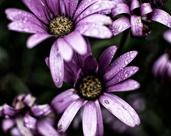 Purple flowers, floral and nature photography  - metallic lustre print
