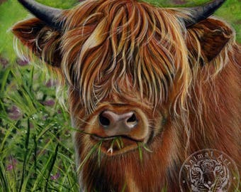 Highland Cow Artwork - Large Canvas Art Print - 60 x 60cm