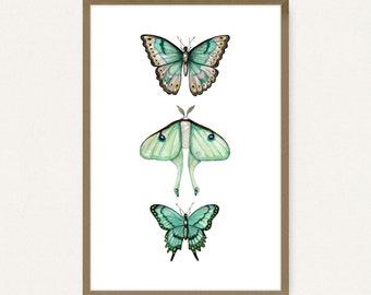 24x36 Poster Size Butterflies & Moth - Printable Art