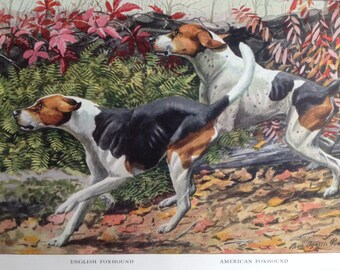 ENGLISH AMERICAN FOXHOUND hunting Dogs Vintage Louis Agassiz Fuertes Mounted 1919 plate print, Congratulations, Birthday gift