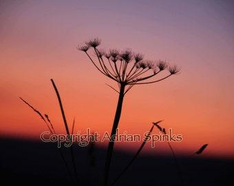 Sunset Seedhead Blank Greeting Card