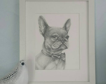 """french bulldog picture.  """"Frenchie"""". Graphite pencil.  9 X 12 in. (22.9 × 30.5 cm)vellum surface paper. dog portrait.   freehand drawing."""