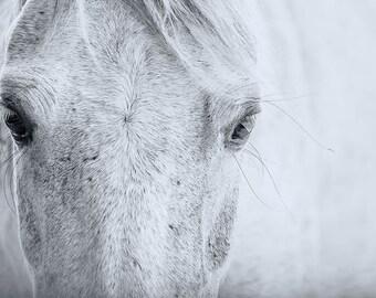 Horse Eye   Photo   Eye closeup   digital download   Horse Wall Art   Equine Photography   Equestrian Decor   Horse Fine Art   Horse Lovers