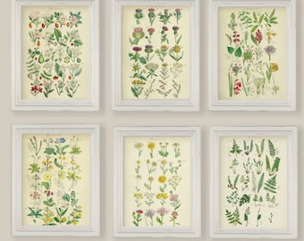 Set Of 6 Botanical Prints Gallery Wall Ferns Wild Spring Summer Flowers Thistles Wild Rose Primrose A4 or 5x7