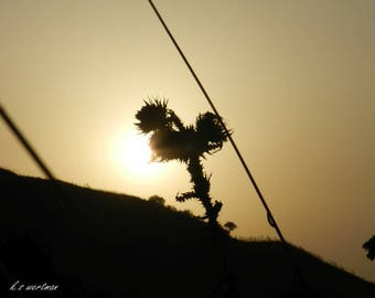 A thorn in the sunset