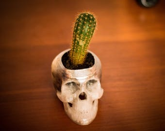 Skull pot * Plant for fun
