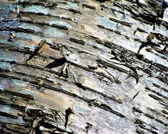 Wild Cherry Tree Bark- Shade insert for lamp