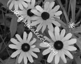 Black-Eyed Susan Grayscale Coloring Page
