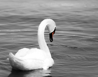 Swan Photography, Swan Print, Swan Art, Black and White Bedroom Wall Art, Fine Art Photography