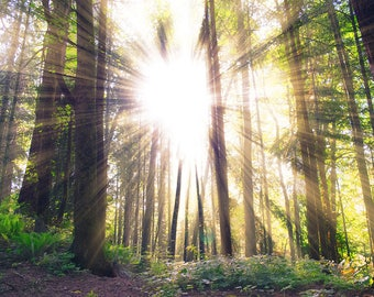 Sun Rays Through Forest Trees Art Print Wall Decor Image Detail - Unframed Poster