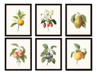 Antique Fruit Prints Set No. 3, Redoute Fruit Prints, Gallery Wall Art, Giclee Prints, Print Sets, Botanical Prints, Kitchen Art, Collage
