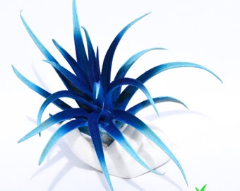 Unique Hand Painted Live Air Plant Display