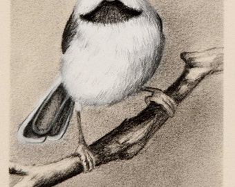 Bird Art Pencil Drawing ~ Little Chickadee Art Original Artwork ~ FREE SHIPPING