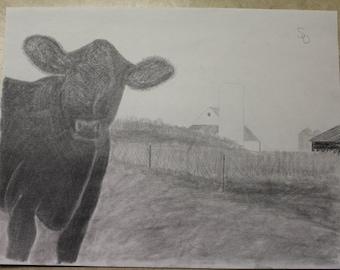 Pasture Calf - Livestock Drawing