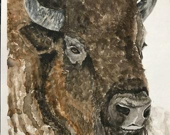 American Bison Watercolor Print
