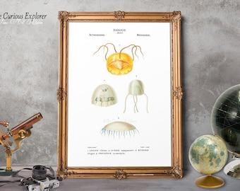 Sea Life Prints, Room Jellyfish Decor, Coral Reef Art Print, Coral Coastal Art, Art Gift Print, Animal Art Print, Laundry Poster - E3s24