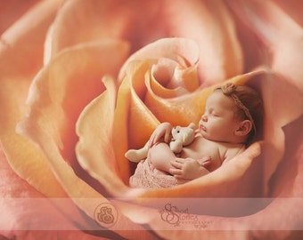 Rose Digital Backdrop- Newborn