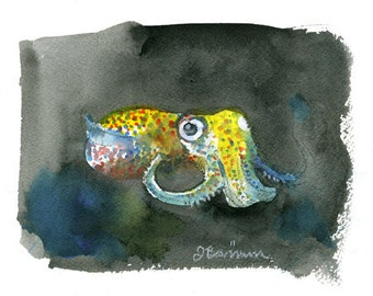 Bobtail Squid, Cephalopod series- illustration print in multiple sizes