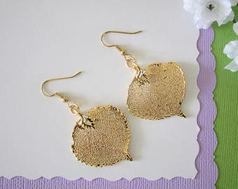 Gold Aspen Leaf Earrings, Lacey Aspen Leaf, Real Leaf Earrings , Aspen Leaf, 24kt Gold, Nature, LESM174