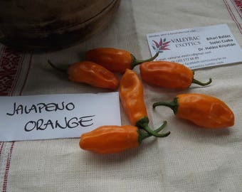 Jalapeno Orange Chili Pepper, 10 seeds