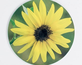 Sandstone Coaster, Yellow Sunflower Blossom Design, Nature, Photograph