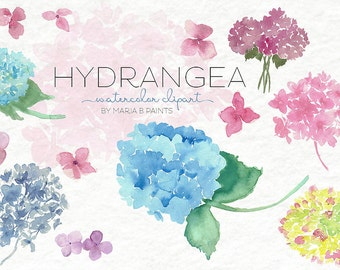 Watercolor Clip Art - Hydrangea-Personal Use-Flowers-Pretty-Fragrant-Instant Download-Bouquet-Flora-SPring-Summer-Nature-Beautiful-Colorful
