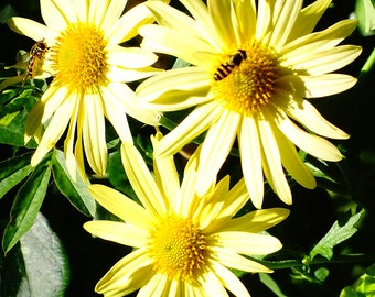 Bee Pollinating Flowers - Nature Photography