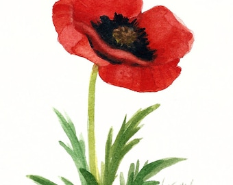 Red Poppy Original Watercolor r5