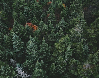 Top View Evergreen Forest Trees Art Print Wall Decor Image Detail - Unframed Poster