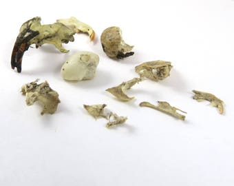 Bone Bits, Partial Rodent Skull from Owl Pellet Remains, Natural Find, Teeth, Tiny Bones, Jaw Bone
