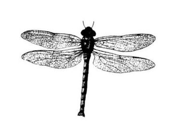 realistic DRAGONFLY unmounted rubber stamp, damsel fly, bug, nature, Sweet Grass Stamps No.12