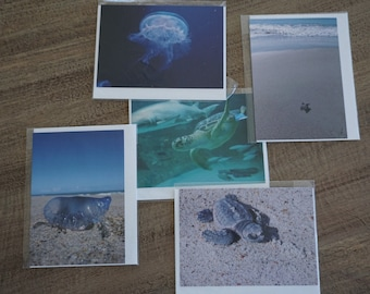 Set of FIVE Assorted Sea Life Note Cards
